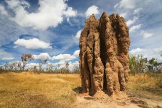 termite_mounds