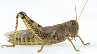 GrasshopperZ2017