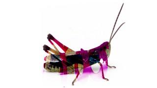 2018-Grasshopper-SvsR-Color burn