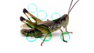 2018-Grasshopper-image-Color burn