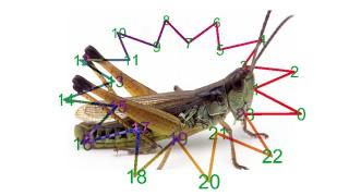 2018-Grasshopper-image-Star
